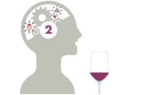 Expérience de la dégustation de vin